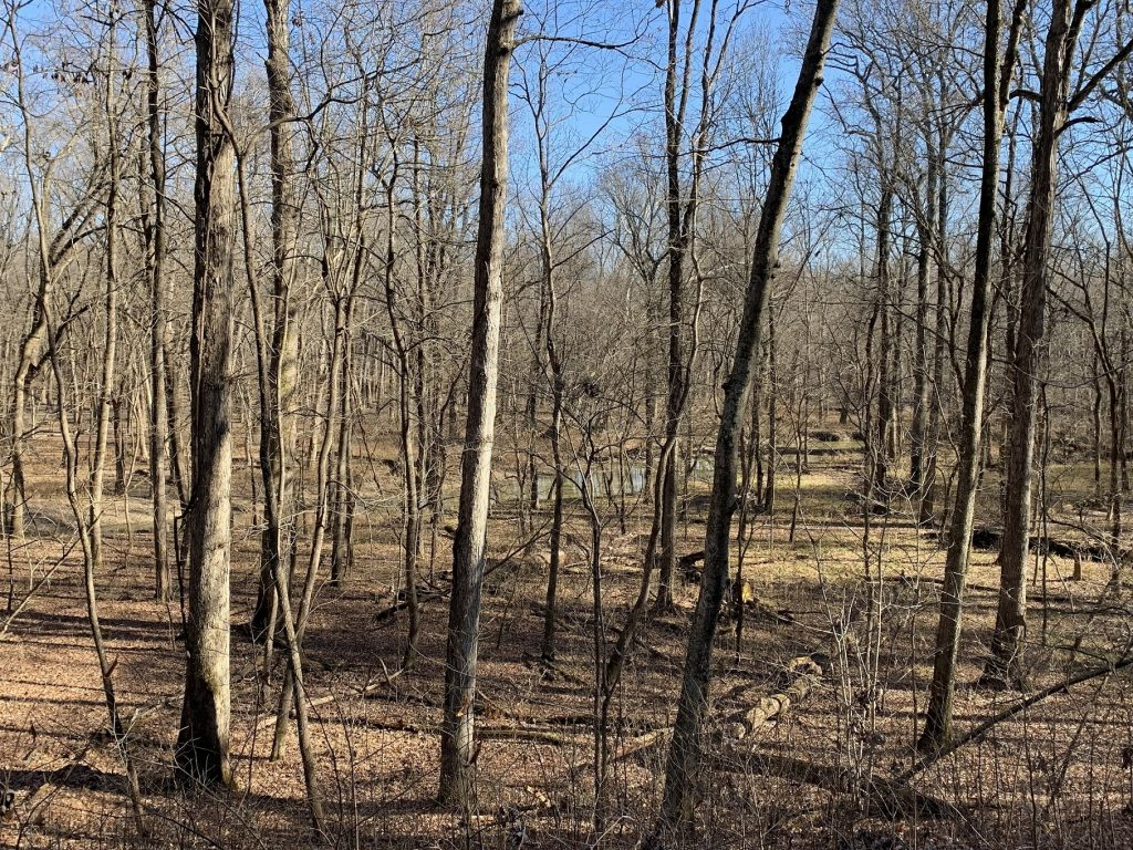 Photo of bottomland forest at Coffee Creek in Beall Woods State Park in Illinois before the leaves have come out on the trees.