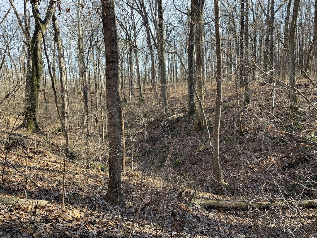 Photo of upland forest during the fall after the leaves have fallen at Beall Woods State Park in Illinois.