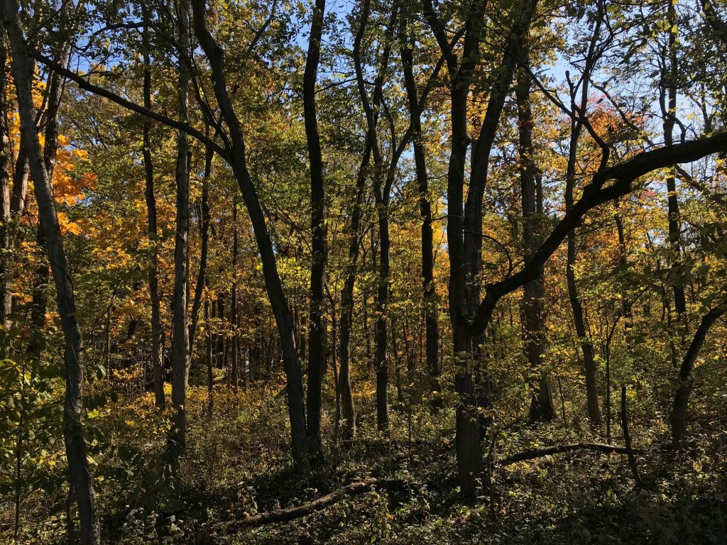 Photo of woodlands in the fall with the leaves turning orange at Crawford State Fish and Wildlife Area.