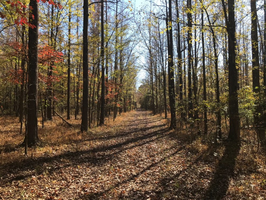 Photo of a hunt trail in the woods during the Fall at Dog Island.